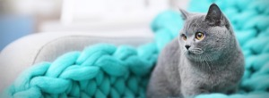 grey cat on chair