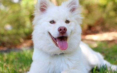 Dental Disease in Cats and Dogs